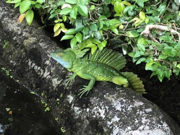 Wildlife in the jungle - Costa Rica