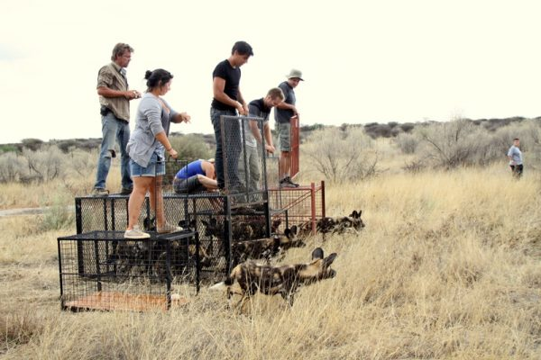 Conservation Medicine open to both medical and animal health professionals