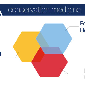 Conservation Medicine, A 'One Medicine' Course